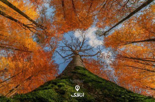 جنگل راش | یکی از زیباترین جاذبه های گردشگری سوادکوه