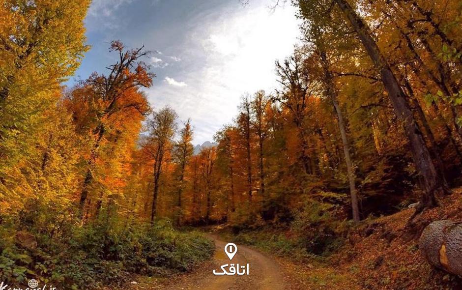 جنگل راش 03