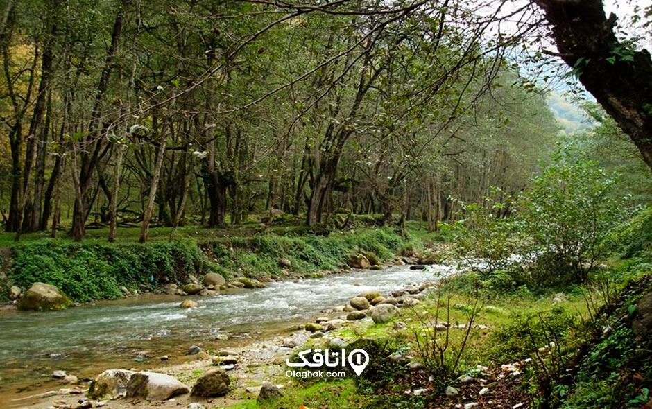 جاذبه تفریحی و توریستی پارک جنگلی فین