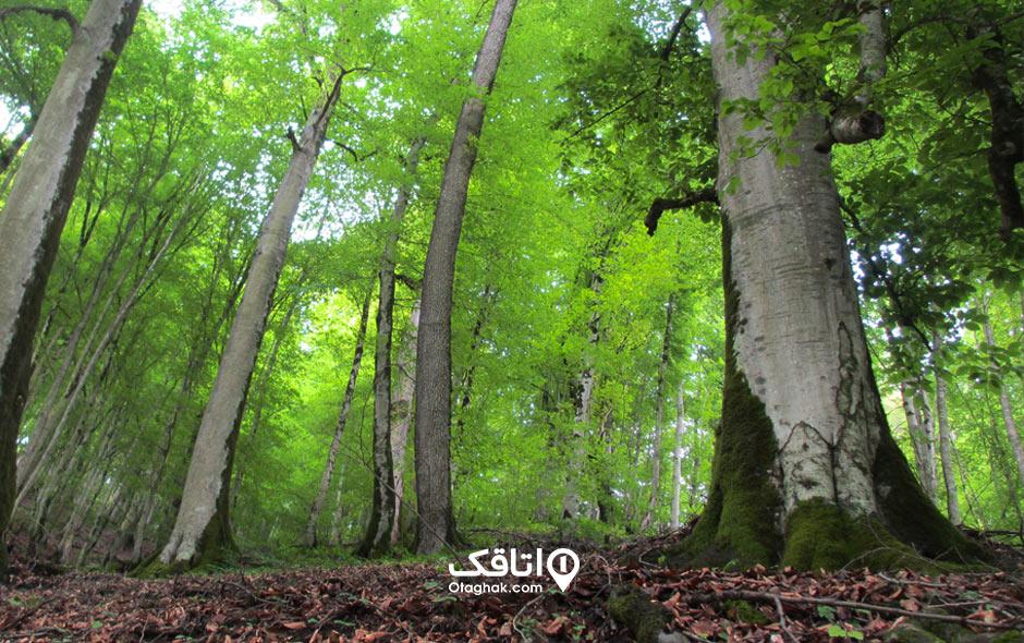 جاذبه گردشگری جنگل خشکه داران
