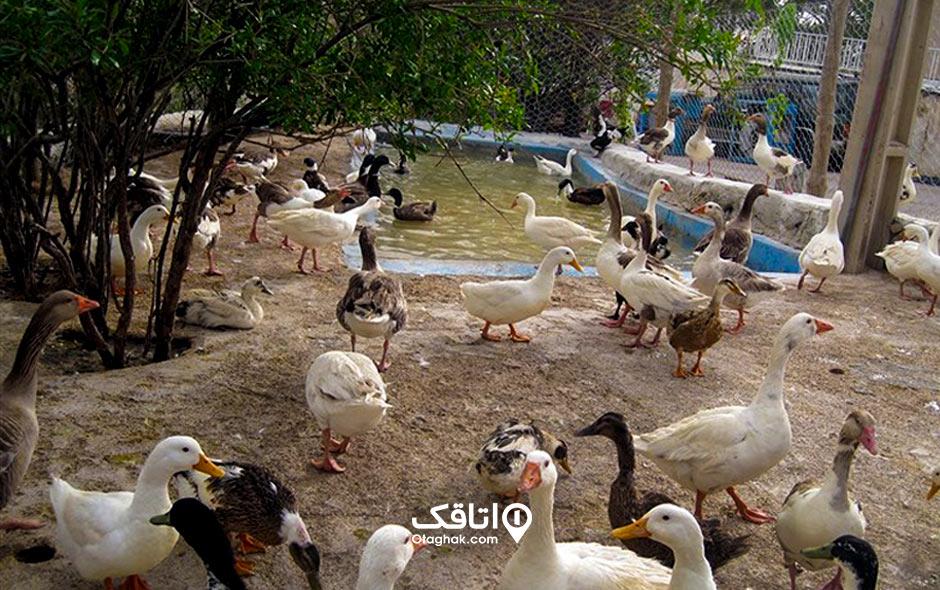 جاذبه گردشگری باغ پرندگان