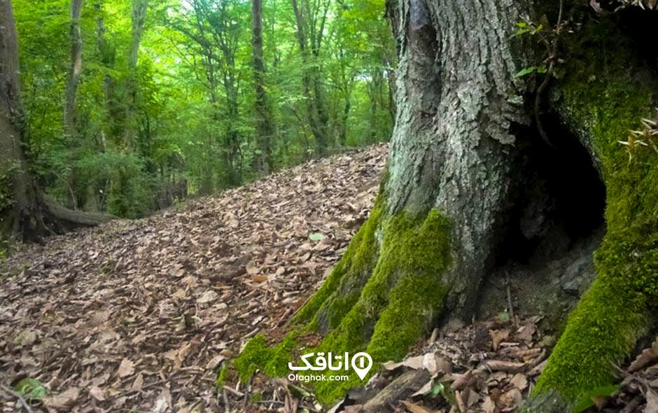 جاذبه توریستی پارک جنگلی تلار