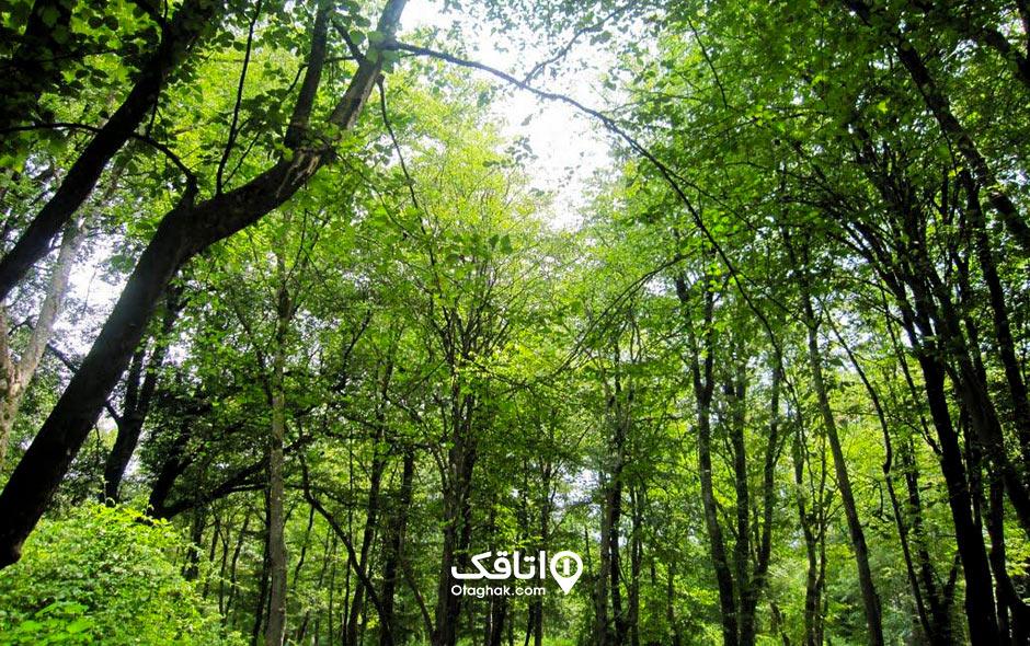 جاذبه گردشگری پارک جنگلی نور