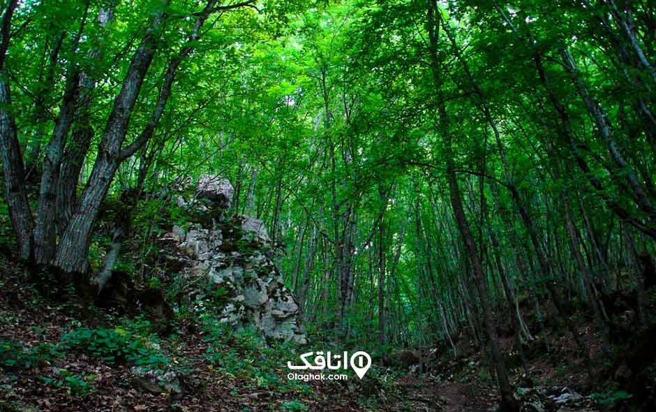پارک جنگلی مکیدی کلیبر