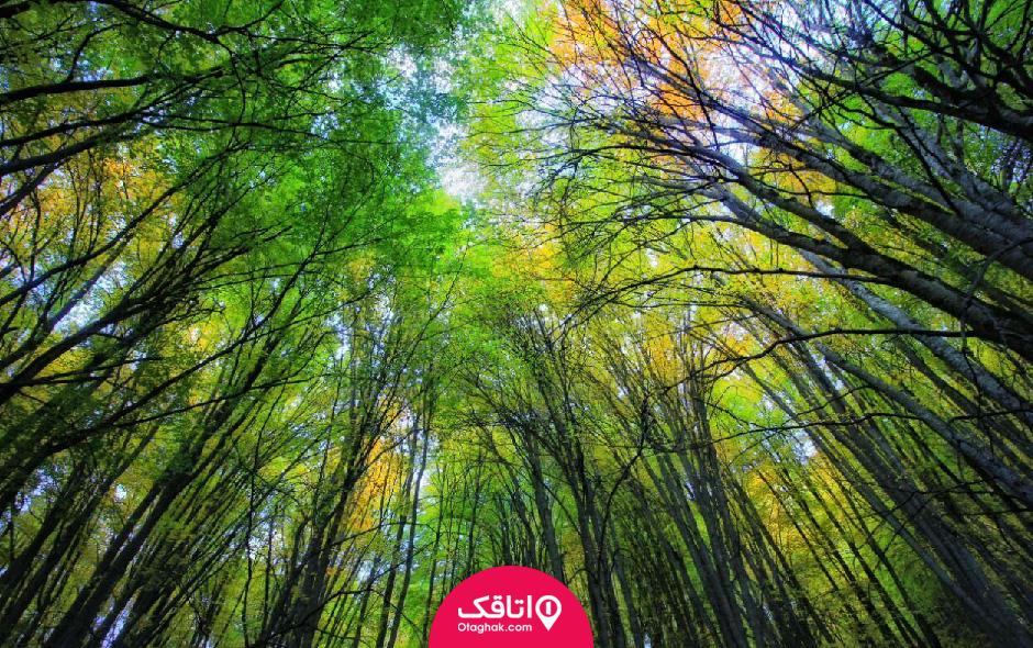 جنگل های هیرکانی ایران