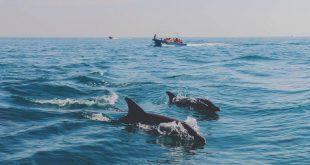 اجاره ویلا در 5 منطقه برتر ساحلی ایران
