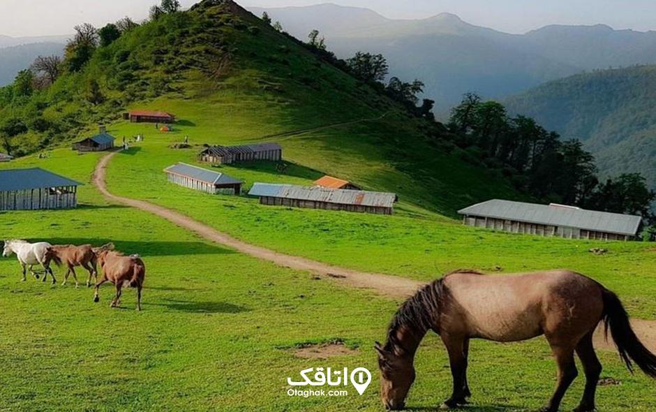 اولسبلنگاه، چراگاه اسب های اهلی و وحشی