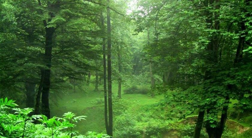 جنگل گردی در رامسر