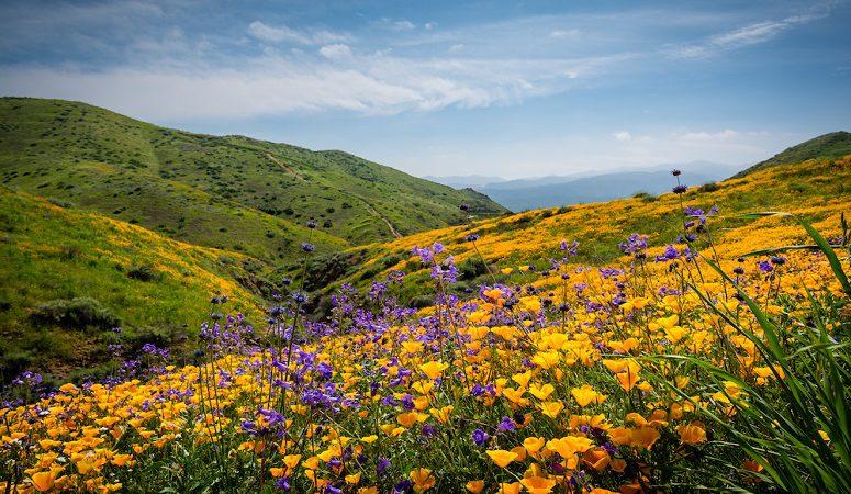 گیاهان خاص در شمال ایران