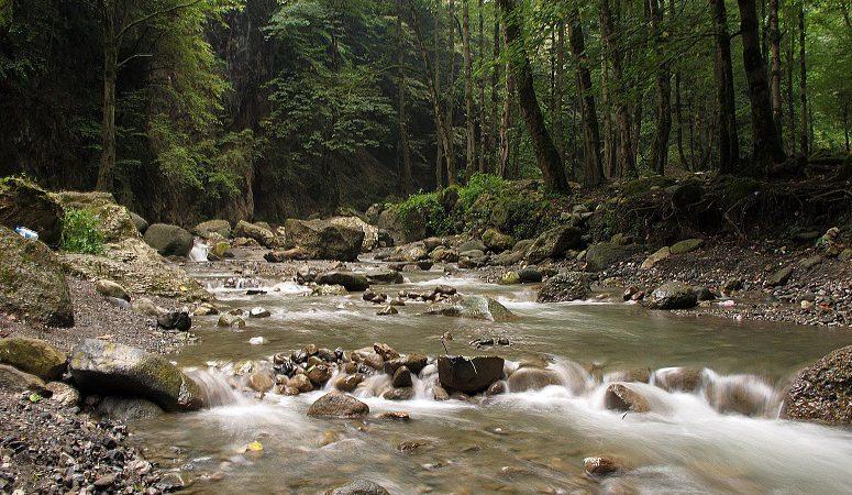 جنگل صفا رود رامسر